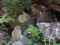 地獄谷野猿公苑-6-14.05