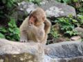 地獄谷野猿公苑-4-14.05