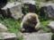 地獄谷野猿公苑-3-14.05