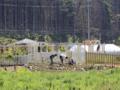 雄勝味噌作・緑化復興プロジェクト「ローズファクトリーガーデン」(
