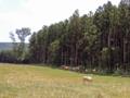 森林ノ牧場(那須町)-1-14.08