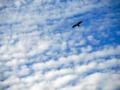 雲にトンビ