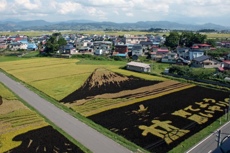 田舎館村「田んぼアート」2014富士山-1-14.09