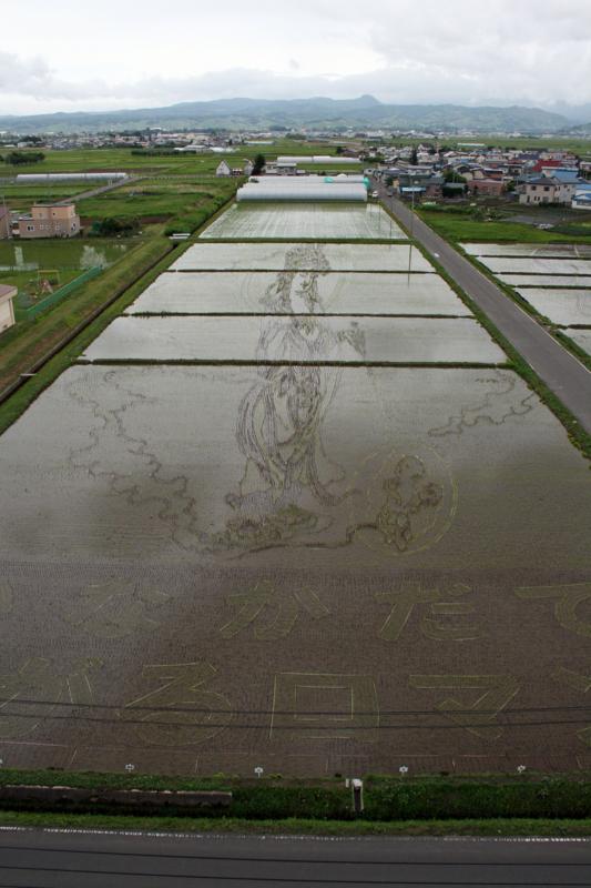田舎館村「田んぼアート」2012悲母観音-1-12.06