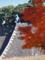 皇居乾通り一般公開の紅葉風景-12-14.12