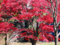 皇居乾通り一般公開の紅葉風景-10-14.12