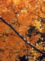 皇居乾通り一般公開の紅葉風景-9-14.12