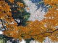 皇居乾通り一般公開の紅葉風景-8-14.12