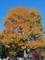 皇居乾通り一般公開の紅葉風景-1-14.12