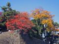 皇居平川門濠石垣の紅葉-1-14.12