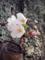 桜(町田)-2-15.03