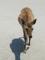 宮島の鹿(廿日市市)-1-15.05