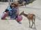 宮島の鹿(廿日市市)-4-15.05