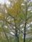 いちょう並木(光が丘公園)-2-15.10
