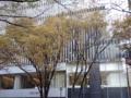 イチョウ黄葉(神宮表参道)-1-15.11
