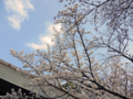 靖国神社の桜-1-16.04