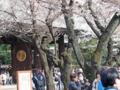 靖国神社の桜-2-16.04