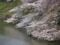 靖国神社の桜-4-16.04