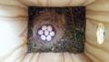 巣箱の小鳥の卵-1-16.07