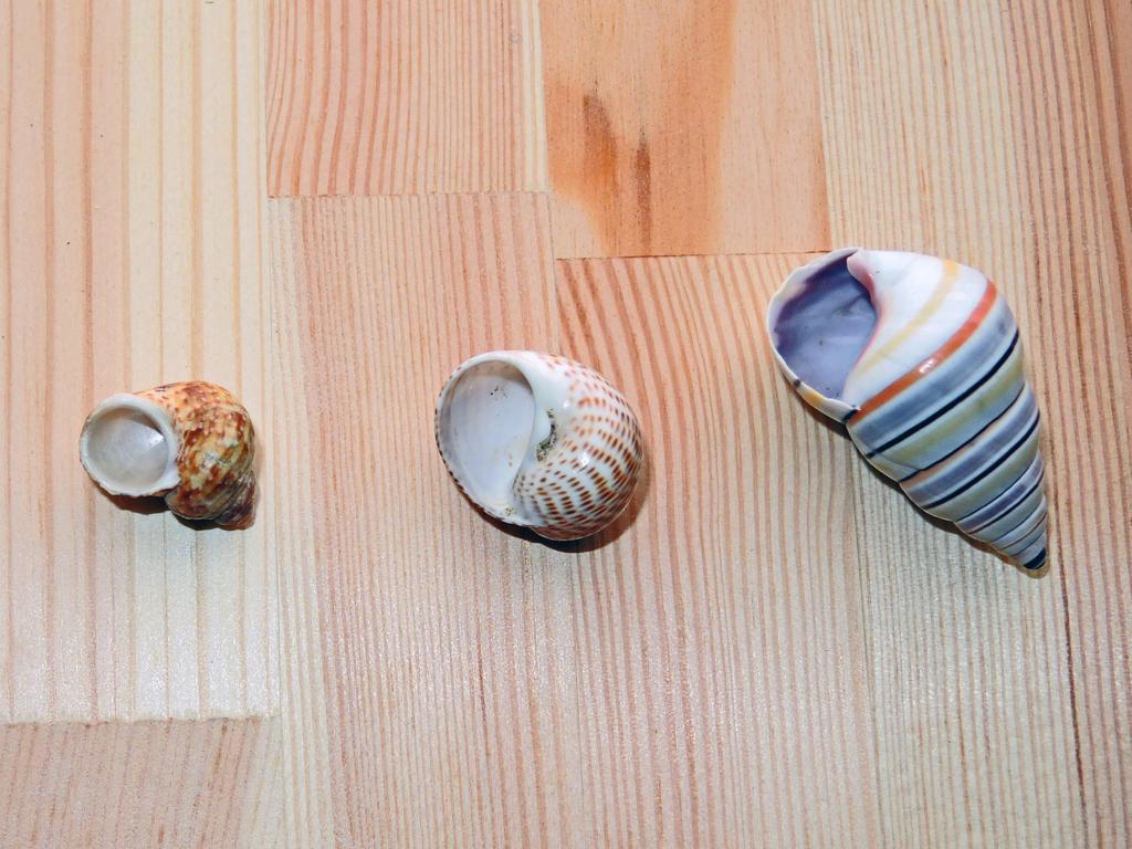 ウォーリーの貝殻-1-16.06