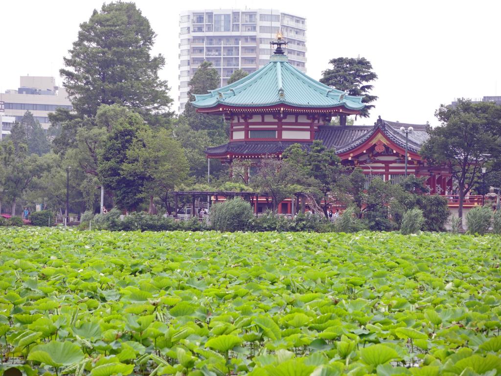 不忍池弁天堂(台東区)-1-16.04