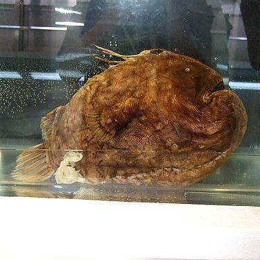 f:id:sashimi-fish1:20160824074504j:image:w220:left