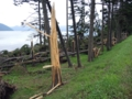 洞爺湖畔台風10号の被害(伊達市)-3-16.09
