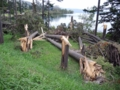 洞爺湖畔台風10号の被害(伊達市)-4-16.09