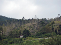 洞爺湖畔台風10号の被害(伊達市)-5-16.09