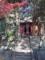 白髭神社(三浦市)-1-16.12