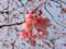 桜(墨堤)-2-17.04