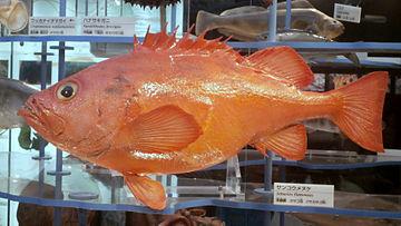 f:id:sashimi-fish1:20170330091054j:image:w210:right