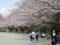 芹ヶ谷公園の桜(町田市)-4-17.03