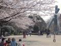 芹ヶ谷公園の桜(町田市)-5-17.03