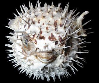 f:id:sashimi-fish1:20170410161344j:image:w250:right