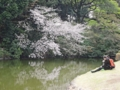 新宿御苑の桜(新宿区)-1-17.03