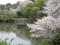 新宿御苑の桜(新宿区)-3-17.03
