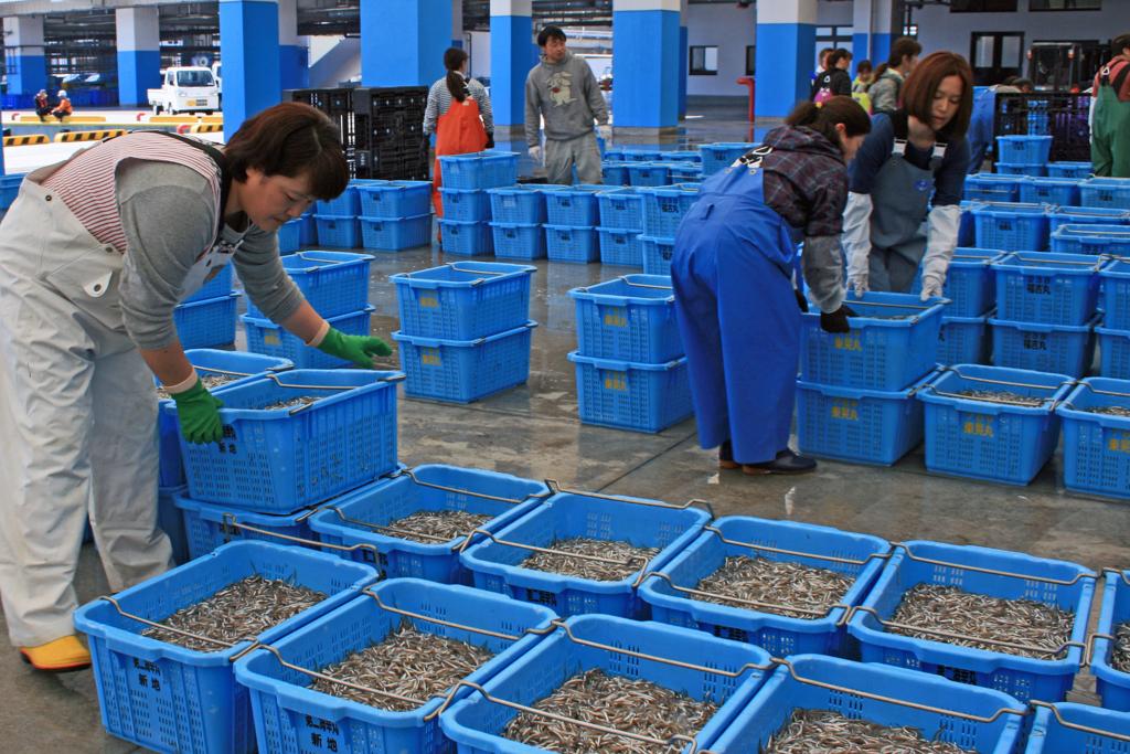 f:id:sashimi-fish1:20170610154009j:image:w270:right