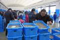相馬双葉市場、コウナゴ競り(相馬市)-4-17.05