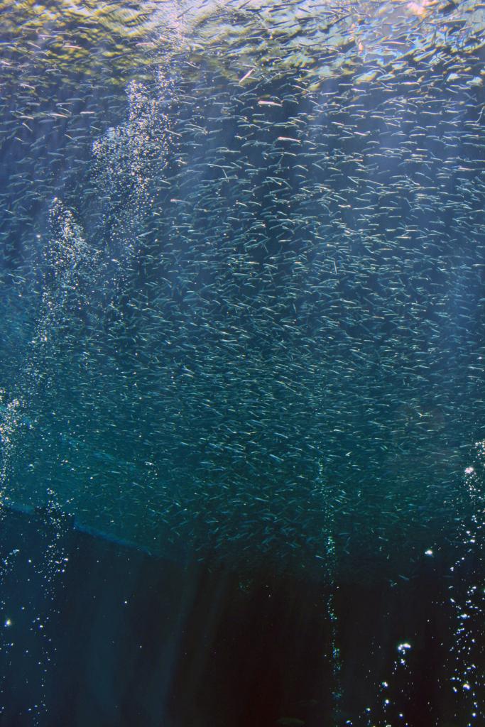 f:id:sashimi-fish1:20170624111509j:image:w220:right