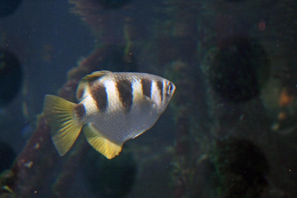 f:id:sashimi-fish1:20170624111925j:image:w180:left