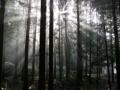 針葉樹林(人工林)