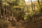 人工林(左)と天然林(右)