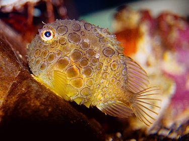 f:id:sashimi-fish1:20170820075352j:image:w200:right