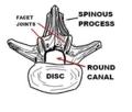 脊椎-1-