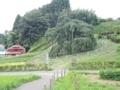 滝桜(三春町)-1-17.08