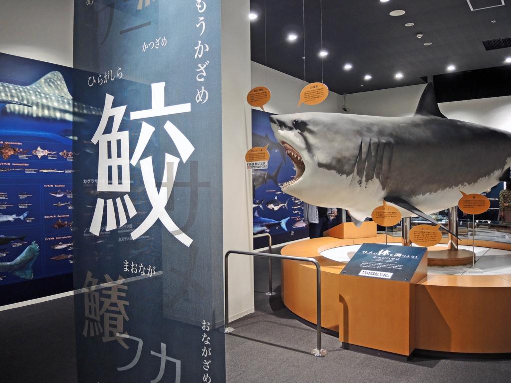 f:id:sashimi-fish1:20171020145753j:image:w250:left
