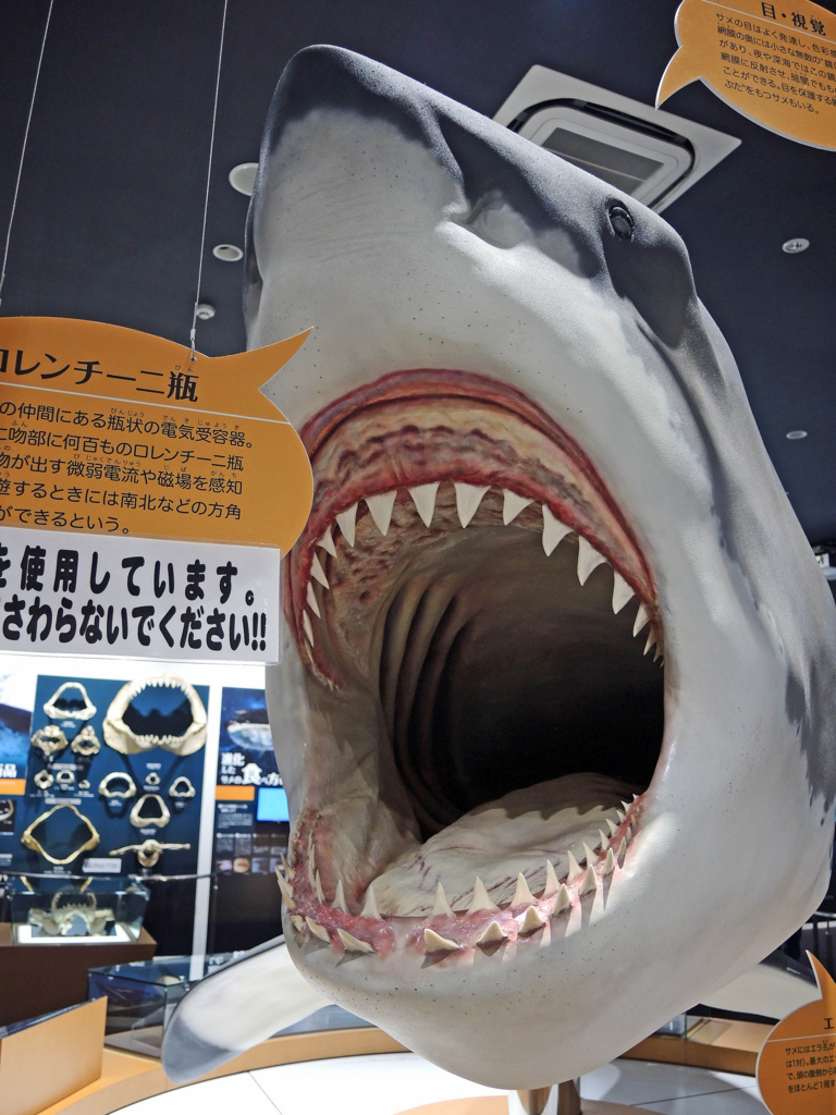 f:id:sashimi-fish1:20171020150104j:image:w300:right