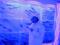 気仙沼港「海の市」氷の博物館-2-17.09