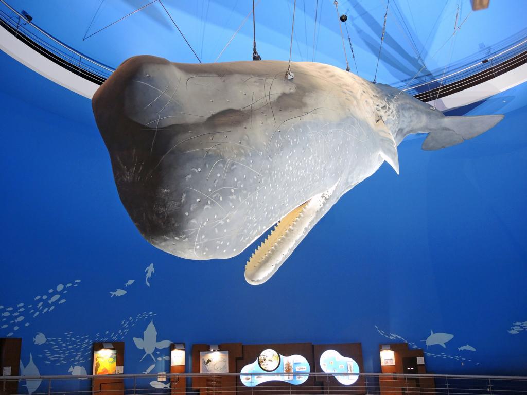 鯨と海の科学館(山田町)-1-17.09